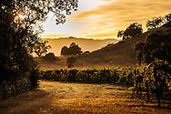 Dusk on a vineyard road in Oakville, California