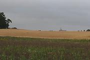 Oat's, crop, tillage, arable, farming, harvest. porridge, fodder,