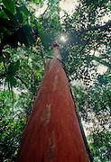 Borneo rain forest; biological diversity; dipterocarps trees; Sabah, Borneo, Malaysia