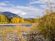 Fall colors along the Flathead River, Columbia Falls, Montana