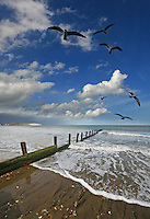 Spring on the east coast of the isle of wight, waves wash up the beach, gulls soar and cumulus clouds go scudding by