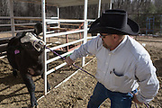 """CREDIT: Steven St. John for The Wall Street Journal<br /> """"ANIMAS<br /> <br /> Brian Dils tends to the animals on his family land in Aztec New Mexico on Tuesday March 23, 2016. Dils and his family depend on water from the Animas River and they are concerned the lack of EPA testing will expose them to harmful levels of lead as more toxic sediment gets stirred up in the spring runoff."""