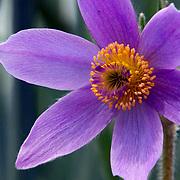 Light purple flowers. Photo by Adel B. Korkor.