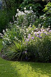 Evening light backlighting an early summer border with Geranium 'Johnson's Blue', Libertia grandiflora and Hesperis matronalis var. albiflora - sweet rocket