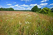 Kaszuby, 2011-07-05. Krajobraz kaszubski - okolice Radunia