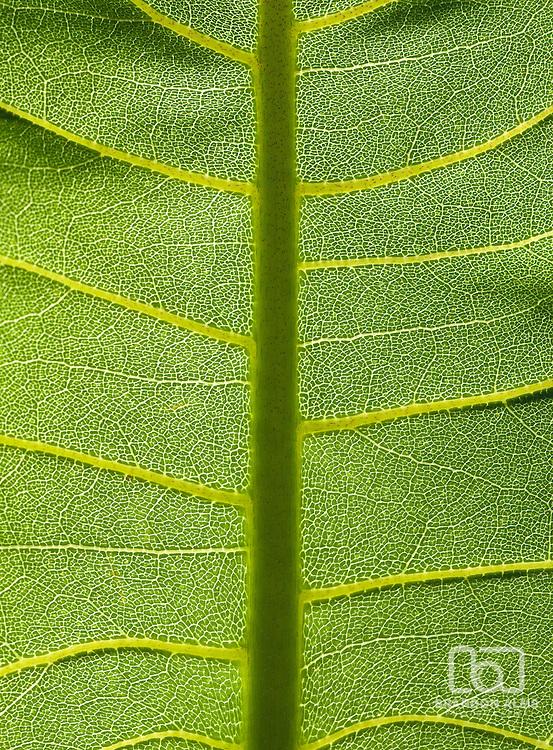 A macro shot of a sunlit green leaf.