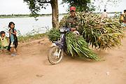 15 MARCH 2006 - CHONG KOH, KANDAL, CAMBODIA: A motorcycle hauling freshly cut sorghum drives through Chong Koh, a village on the Mekong River in central Cambodia. Photo by Jack Kurtz / ZUMA Press