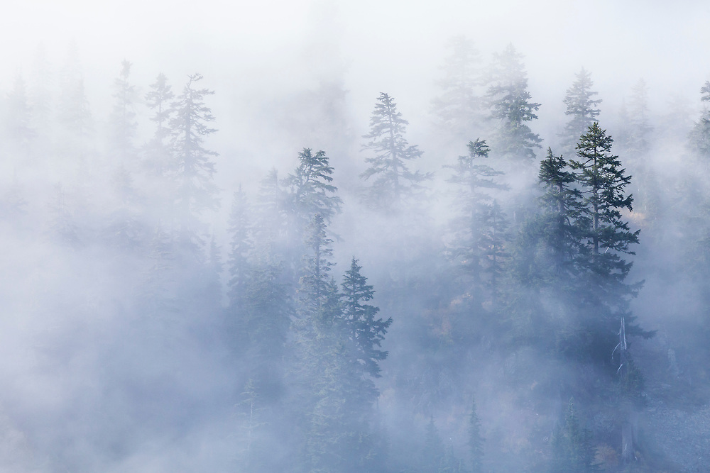 Low clouds drift through the forest near Snow Lake at Snoqualmie pass in the Central Cascades of Washington state, USA. Autumn.