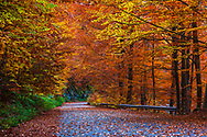 Road across a colorful autumn forest