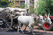young man driving a two oxen wagon. India, Kerala, a state on the tropical coast of south west India