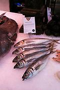 Mackerel fish displayed on ice Mercado San Miguel market, Madrid city centre, Spain