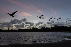 © Licensed to London News Pictures. 16/10/2017. London, UK. A flock of geese flies overhead at sunset over the Round Pond in Kensington Gardens.  Dust brought by winds from Hurricane Ophelia has caused the sun to appear a mysterious reddish orange colour. Photo credit : Stephen Chung/LNP