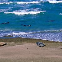 South America, Argentina, Valdes Peninsula. Sea Lion colony of the Valdes Peninsula.
