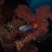 Dive Spot: J Nose