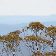 Blue Mountains and gum trees as seen from Echo Point in Katoomba, New South Wales, Australia. The dense forests of gum trees (eucalyptus trees) contribute to the haze that gives the Blue Mountains their distinctive color.