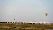 Wildebeests in their annual great migration in Maasai Mara (Kenya) as tourists enjoy their hot air balloon safari.