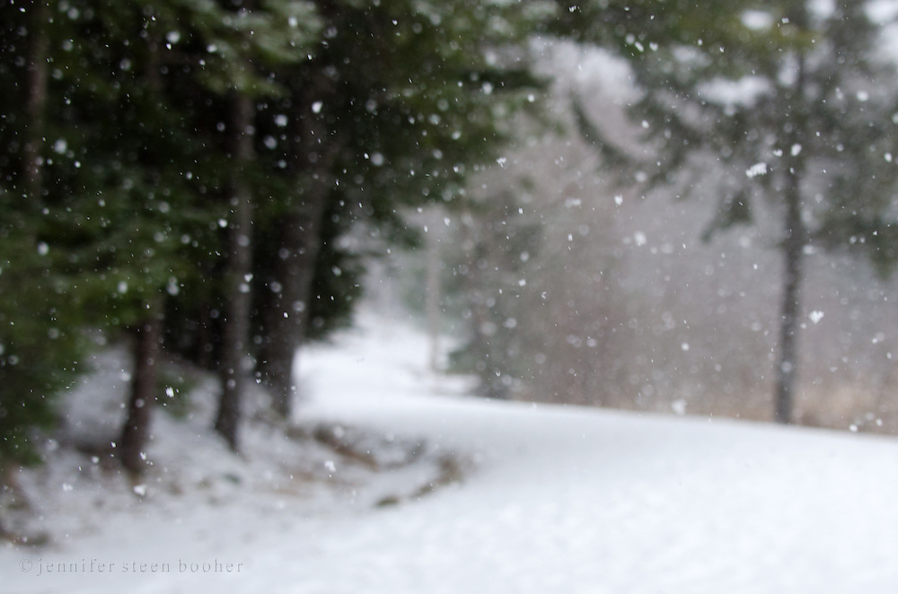 Snow falling on the Eagle Lake Carriage Road in Acadia National Park, Maine.