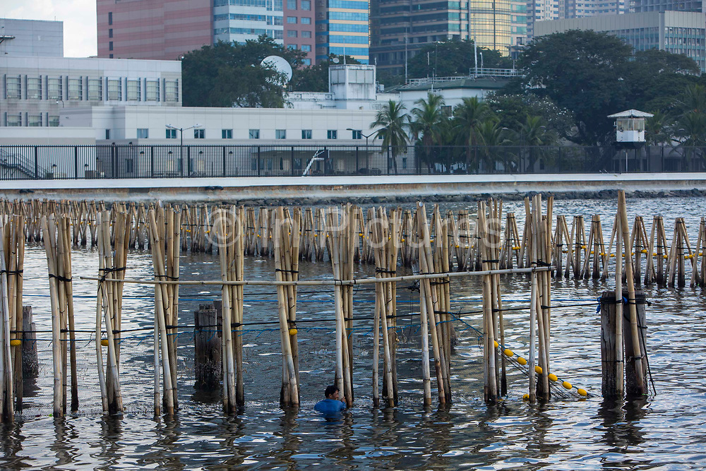 A fisherman checks his prawn fishing nets in Manila Bay in front of the high-rise buildings part of the Manila Skyline, Manila, Metro Manila, Philippines.