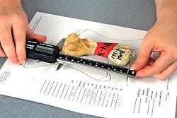 Melissa Snover Measuring Turtle Bone