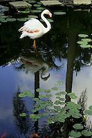 Flamingo and Lotus at Mananitas Cuernavaca