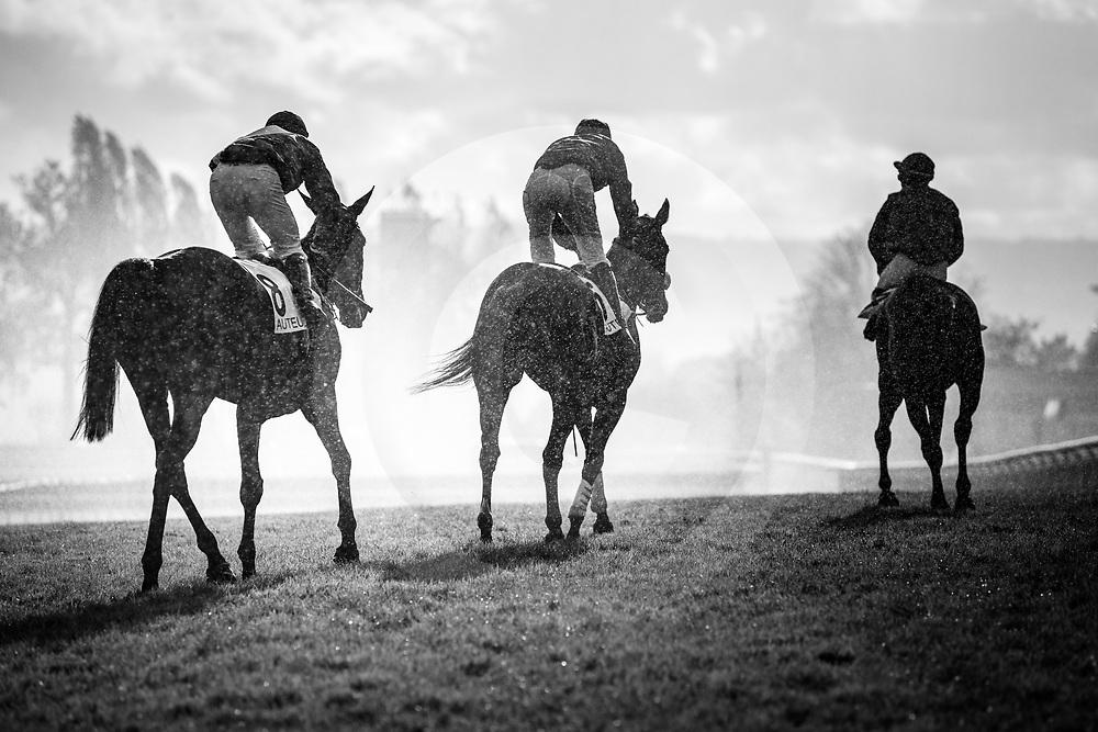 Scenes  4th  race Auteuil 05/11/2017 photo: Zuzanna Lupa