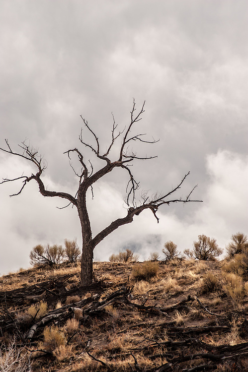 A gnarled tree stands on a hillside near Medano Creek in Great Sand Dunes National Park and Preserve, Colorado.
