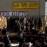 Annual Raw Fur Auction held by the Alaska Trappers Association. Fairbanks, Alaska. March.