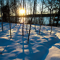 Fresh snow, young birch trees along the Damariscotta River...