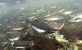 Alaska, USA Topside & Submerged