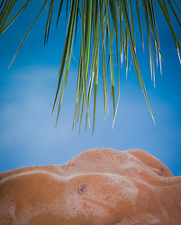 detail of a muscular man's torso and a palm tree