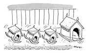 (A dog rocks her puppies kennel shaped cradles with a line tied to her tail)