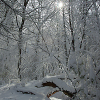 Walden Pond, the morning after a February snowstorm