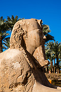 The Sphinx of Memphis statue at the  open air Mit Rahina Museum, Al Badrashin, Giza Governate, Egypt.