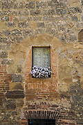 Purple flowers in a window box highlight a lace covered window framed by a centuries old stone buidling in the Tuscan town of Siena