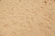 Sea turtle tracks crossing the sand at Brava Beach on Culebra.
