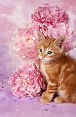 Cats photographic