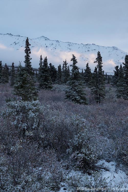 Low fog and trees below the mountains of Primrose Ridge, Denali National Park, Alaska
