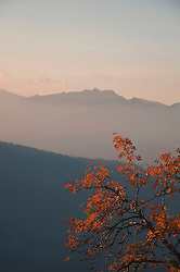 View of Wetterstein mountains and alps with rowan tree, Bavaria, Germany