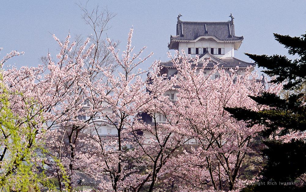 Cherry blossoms in springtime, near Himeji Castle, Himeji, Hyogo Prefecture, Japan
