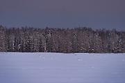 "Dusk sets over snowy winter landscape of forest and fields in ""Dunduru pļavas"", Kemeri National Park (Ķemeru Nacionālais parks), Latvia Ⓒ Davis Ulands | davisulands.com"