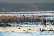 Mamakating, New York - Early spring scenes at the Bashakill Wildlife Management Area on March 24, 2015.