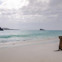 Ecuador - Galapagos