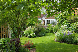 Looking down the garden towards the house. Curving lawn and borders