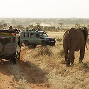 Waiting for the elephant to pass in Samburu. Kenya