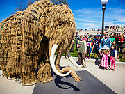 22 APRIL 2017 - ST. PAUL, MN: A mastadon walks through the crowd during the March for Science in St. Paul. The mastadon was a huge puppet, people in it moved it by manipulating the legs and trunk. More than 10,000 people marched from the St. Paul Cathedral to the Minnesota State Capitol in St. Paul during the March for Science. March organizers said the march was non-partisan and was to show support for the sciences, including the sciences behind climate change and vaccines.      PHOTO BY JACK KURTZ