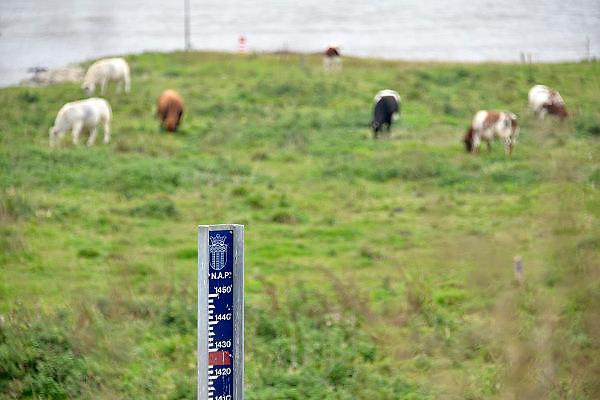 Nederland, Lent, Nijmegen, 26-9-2014 Een peilstok staat langs de Waal in de uiterwaarden. Bij 17 meter gaat het water de dijk over. In 1995 was de stand 16 meter 45. Om overstromingen te voorkomen en het water beter te laten doorstromen in de bocht bij deze stad wordt er een nevengeul aangelegd. Aan de overkant van de Waal bij Nijmegen wordt druk gewerkt aan het creeren van een nevengeul in de rivier om bij hoogwater een betere waterafvoer te hebben. Het dorp veurlent komt op een kunstmatig eiland te liggen. Inmiddels begint de nieuwe kade aan de noordkant van deze geul vorm te krijgen. Ruimte voor de rivier, water, waal. In de nieuwe dijk wordt een drempel gebouwd die stapsgewijs water doorlaat en bij hoogwater overloopt. Measures taken by Nijmegen to give the river Waal, Rhine, more space to flow during highwater. Room, space for the river. Reducing the level, waterlevel. Foto: Flip Franssen/HollandseHoogte