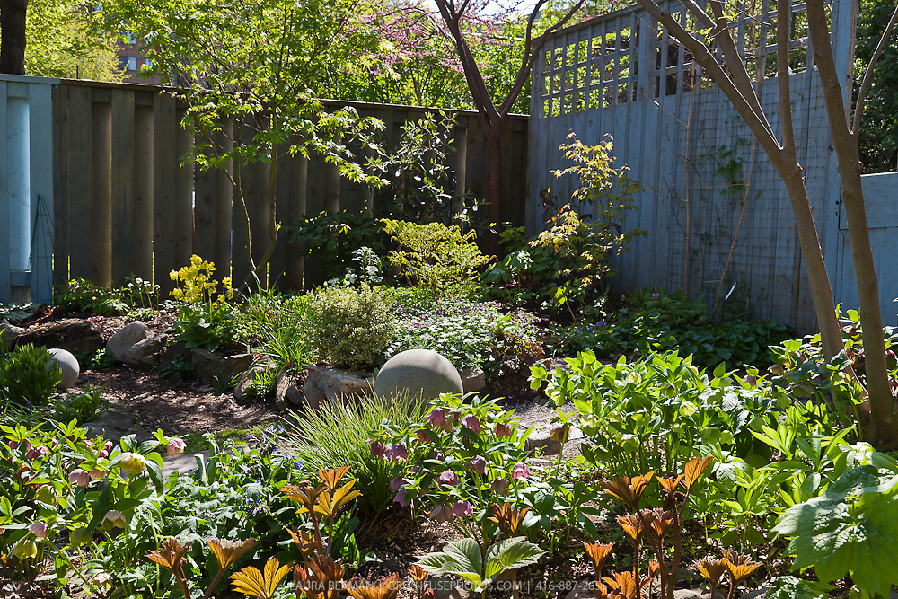 An urban woodland garden planted with a mix of native and non-native plants.