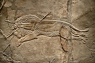 Assyrian relief sculpture panel from the  lion hunt showing a dying lion.  From Nineveh  North Palace, Iraq,  668-627 B.C.  British Museum Assyrian  Archaeological exhibit no ME 124864 .<br /> <br /> If you prefer to buy from our ALAMY PHOTO LIBRARY  Collection visit : https://www.alamy.com/portfolio/paul-williams-funkystock/ancient-assyria-antiquities.html  Refine search by adding background colour, place, subject, museum etc into the LOWER SEARCH WITHIN GALLERY box to <br /> <br /> Visit our ANCIENT ASSYRIAN PHOTO COLLECTIONS for more photos to download or buy as wall art prints https://funkystock.photoshelter.com/gallery-collection/Ancient-Assyrian-Art-Artefacts-Antiquities-Historic-Sites-Pictures-Images-of/C0000cjRqQyJjLag