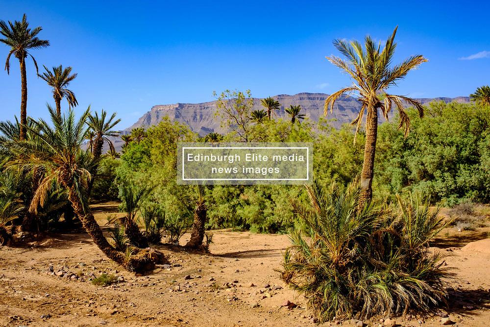 An oasis near Zagora in southern Morocco<br /> <br /> (c) Andrew Wilson   Edinburgh Elite media