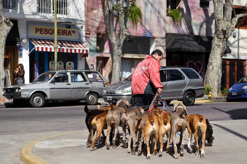 Buenos Aires, Argentina 23 August 2009<br /> Typical scene in Buenos Aires: a dog walker.<br /> PHOTO: EZEQUIEL SCAGNETTI